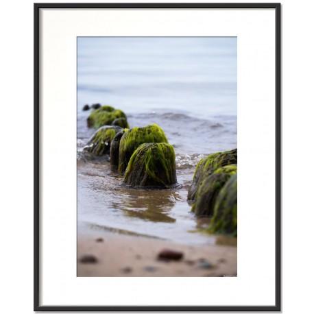 baltic algae vol1 - trzaw