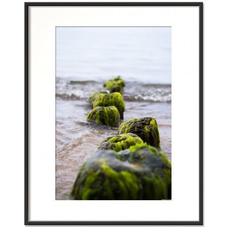 baltic algae vol2 - trzaw