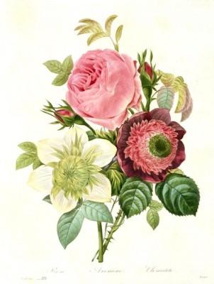 Rose, Anemone und Klematis - Pierre-Joseph Redouté
