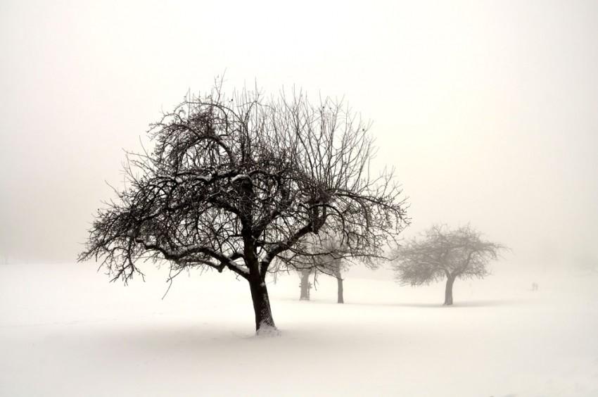 Obraz na płótnie 'Winterland'