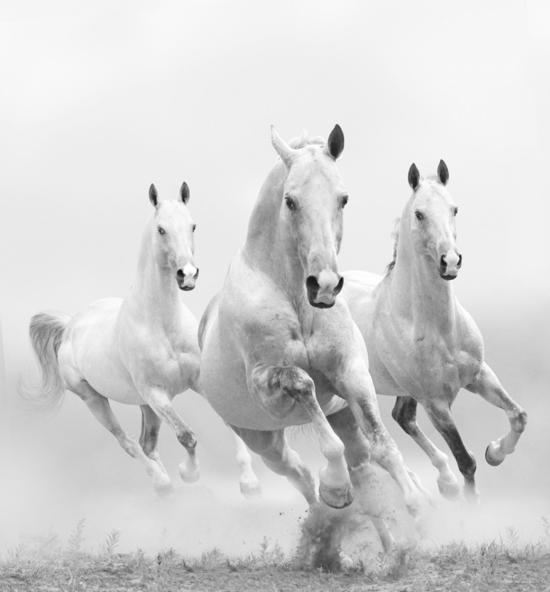 PLAKAT 'WHITE HORSES IN DUST'
